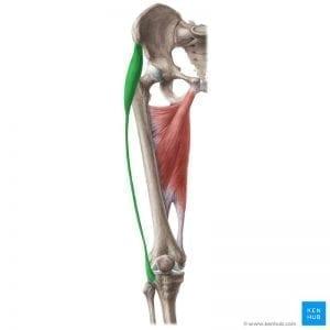 a pin to a post about how relieving your tensor fasciae latae pain can help relieve hip and knee pain