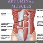 a pin featuring a drawing of abdominal muscles