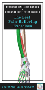 pin to a post about the extensor hallucis longus and the extensor digitorum longus muscles